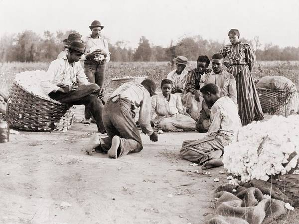 History Art Print featuring the photograph African Americans Enjoying Some Rest by Everett