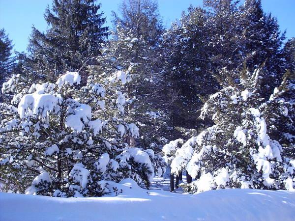 After A New England Snowstorm Art Print featuring the photograph After A New England Snowstorm by Lucien Beauley