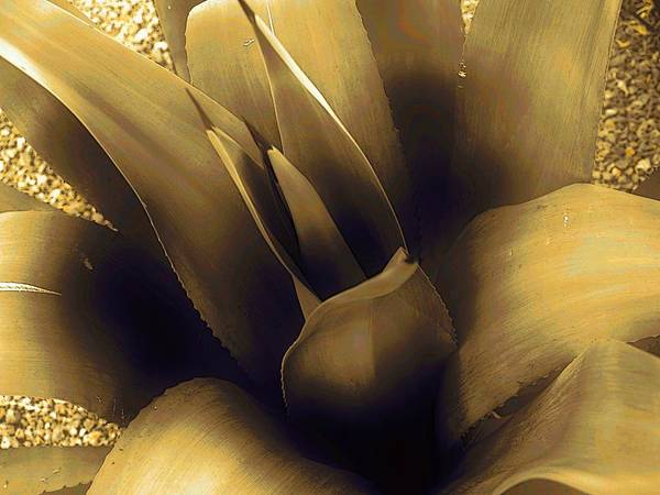 Agave Art Print featuring the photograph Agave Glow by Regina Arnold