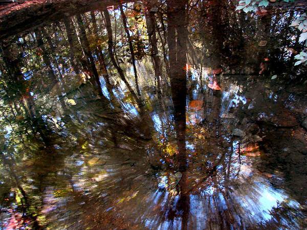 Pond Art Print featuring the photograph Anomaly by Tammy Cantrell
