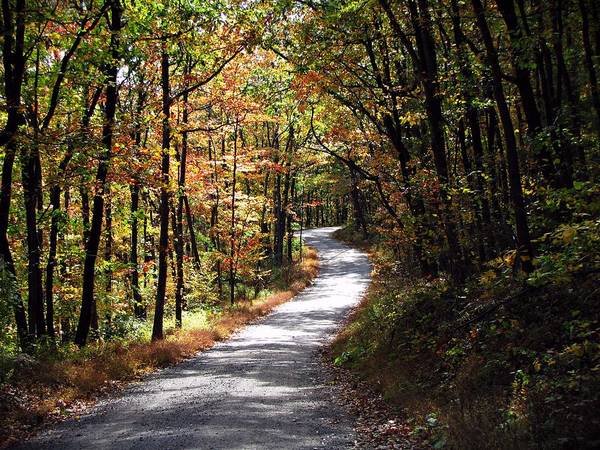 Autumn Art Print featuring the photograph Autumn Country Lane by David Dehner