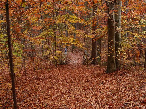 Autumn Art Print featuring the photograph Autumn Creekside Trail by Faye E Davis
