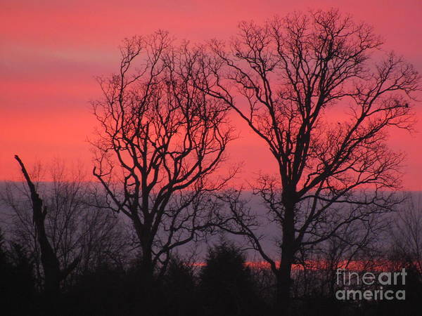 Pink Art Print featuring the photograph Bare Essentials by Michele Bishop