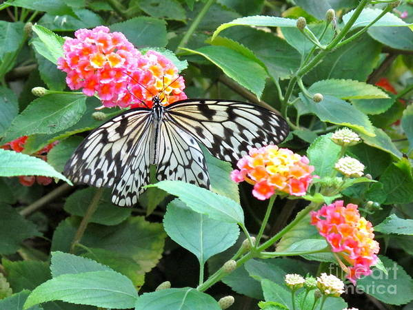 Butterfly Art Print featuring the photograph Beautiful Butterfly And Flowers by Phyllis Kaltenbach