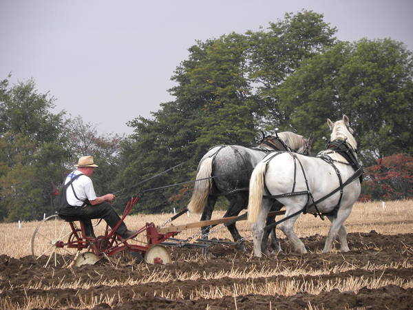 Ipm Art Print featuring the photograph Bickleshire Farm Team by Peggy McDonald