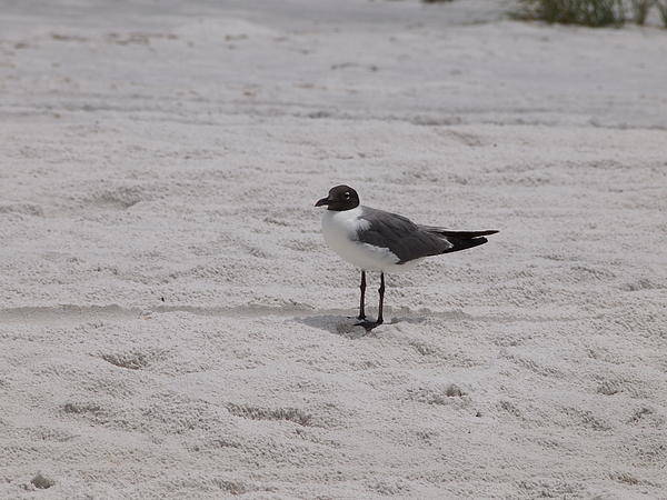 Brid Art Print featuring the photograph Bird On The Beach 2 by Judge Howell