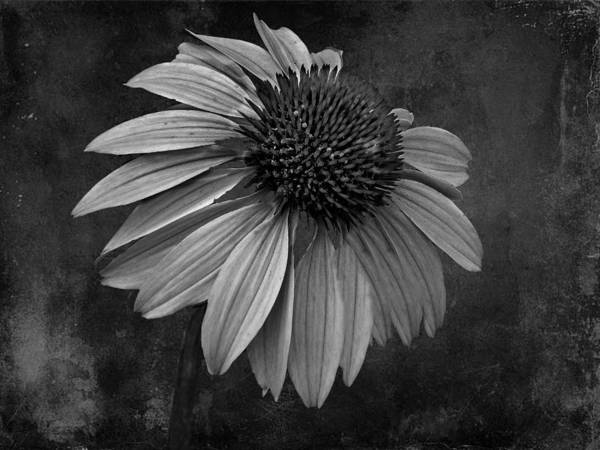 Bittersweet Art Print featuring the photograph Bittersweet Memories - Bw by David Dehner