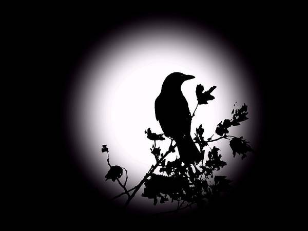 Blackbird Art Print featuring the photograph Blackbird In Silhouette by David Dehner