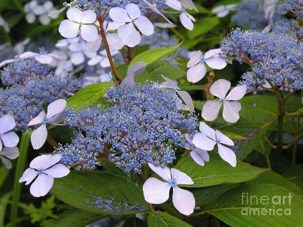 Blue Art Print featuring the photograph Blue by Diane Greco-Lesser