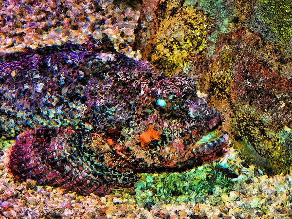 Fish Art Print featuring the photograph Blue Eyed Fish by Jeff Breiman
