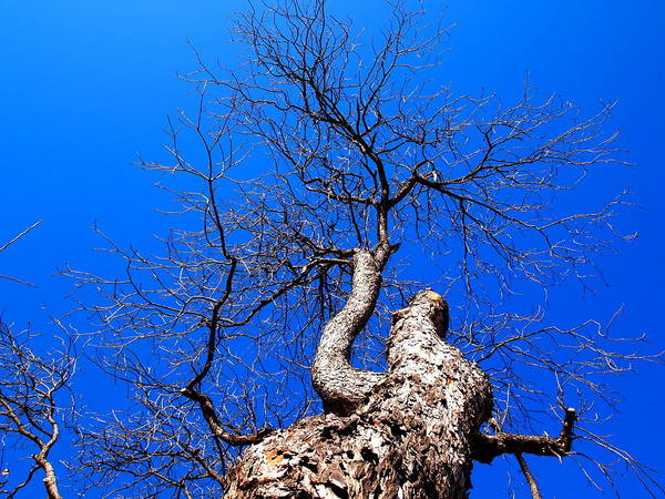 Tree Art Print featuring the photograph Branches In The Sky by Judge Howell