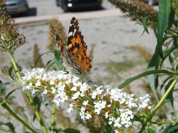 Foliage Art Print featuring the photograph Butterfly by M S