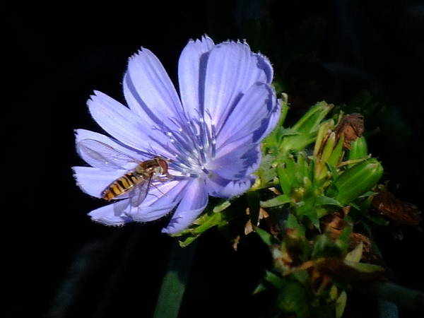 Bee Art Print featuring the photograph Buzzy In Blue by Alison Richardson-Douglas