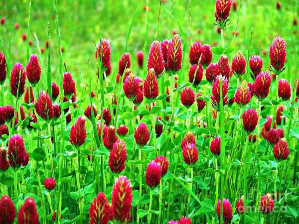 Wildflowers Art Print featuring the photograph Crimson by Tisha Clinkenbeard