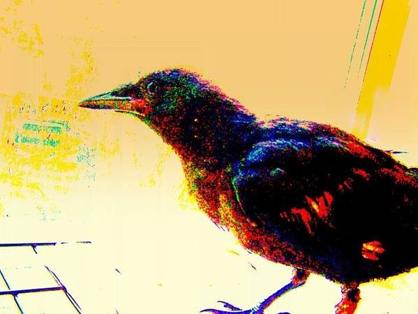 Crow Art Print featuring the mixed media Crow Walk by YoMamaBird Rhonda