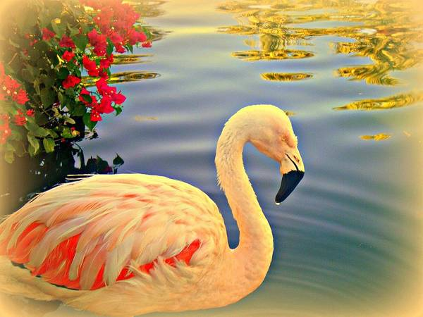 Flamingos Art Print featuring the photograph Dreamy Flamingo by Kevin Moore