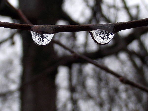 Eyes Tree Rain Raindrop Water Drop Upsidedown Down Up Branch Black White Wet Art Print featuring the photograph Eye See You by Earths Beauty