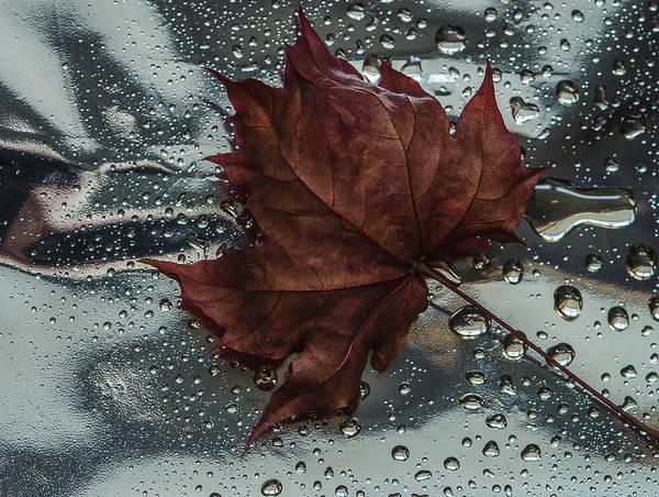 Still Life Art Print featuring the photograph Fallen Leaf by Vladimir Kholostykh