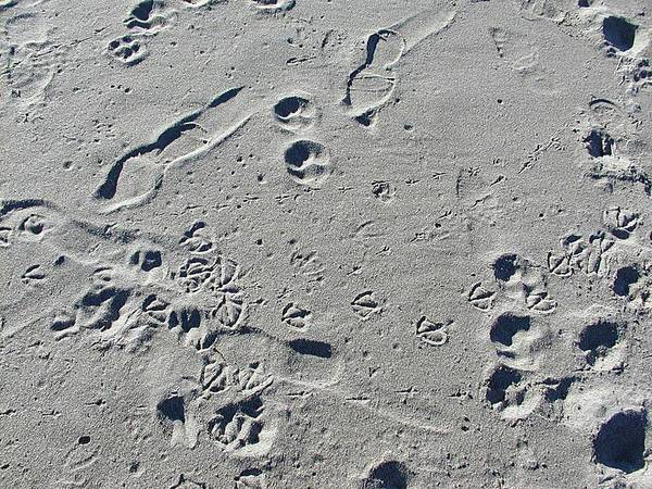 Beach Art Print featuring the photograph Footprints In The Sand by HW Kateley