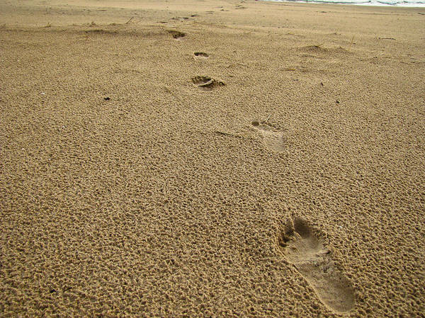 Beach Art Print featuring the photograph Footprints In The Sand by Jeremy Clark