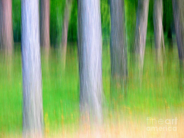 Nature Art Print featuring the photograph Forest Abstract by Odon Czintos