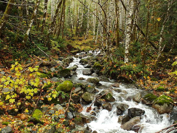 River Art Print featuring the photograph Forest Overflows by Shannon Ireland