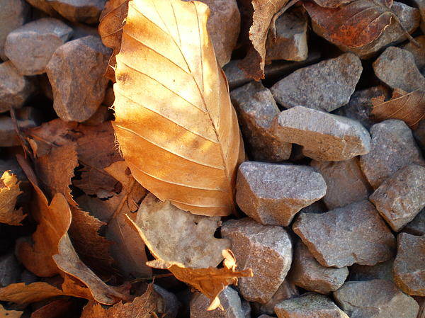 Gold Art Print featuring the photograph Golden Leaf by Gareth Tanner