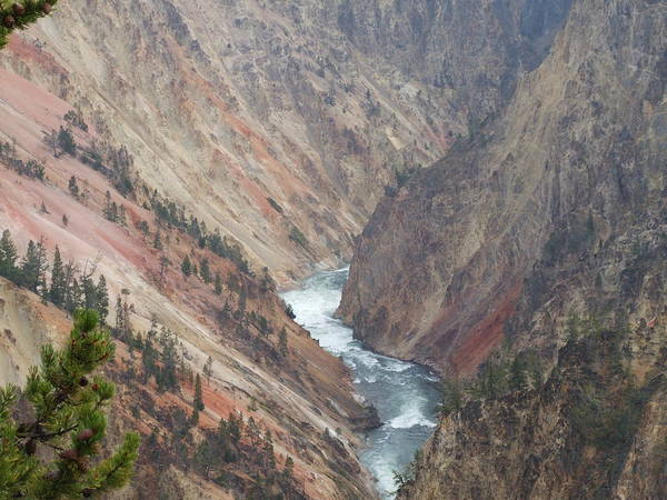 Nature Art Print featuring the photograph Grand Canyon At Yellowstone by Wendy Hope