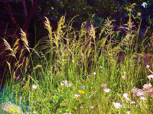 Dark Background High Lights Grass And Pastle Pink And Light Blue Flowers Art Print featuring the digital art Grass And Pastel Flowers by Annie Gibbons