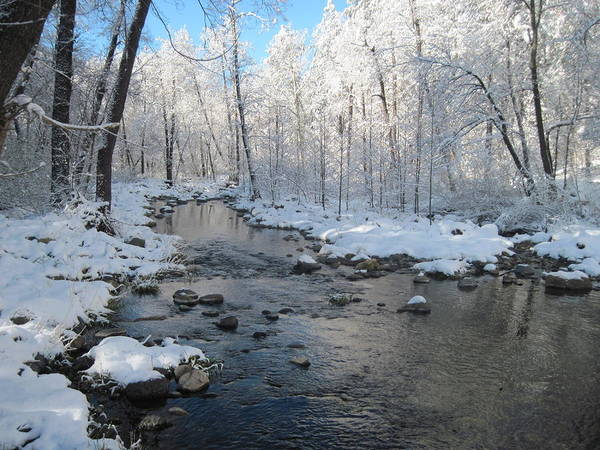 Creek Art Print featuring the photograph Icing On The Trees by Sandy Tracey