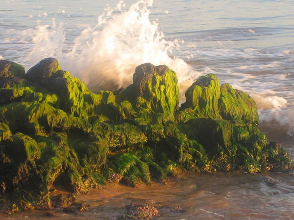 Sea Art Print featuring the photograph In The Magic Light by Marilyn Wilson