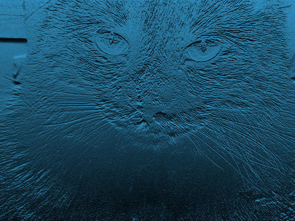 Cat Art Print featuring the photograph Jazzy Judy by Paula Greenlee