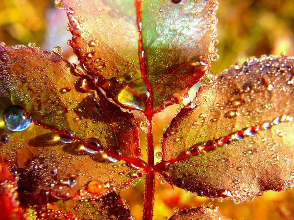 Leaf Art Print featuring the photograph Leaf Me Alone by Shannon Blanchard