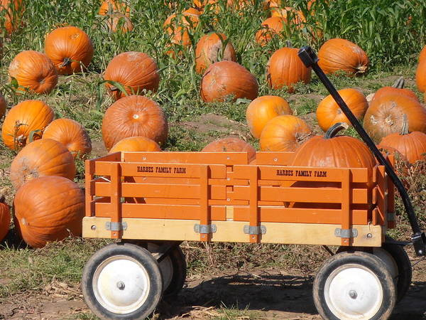 Wagon Art Print featuring the photograph Little Orange Wagon by Kimberly Perry