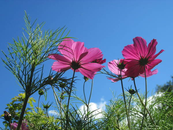 Cosmos Art Print featuring the photograph Looking Up by Jennifer Watson