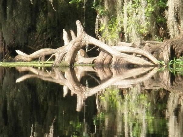 Florida Art Print featuring the photograph Mirrorknot by Warren Clark