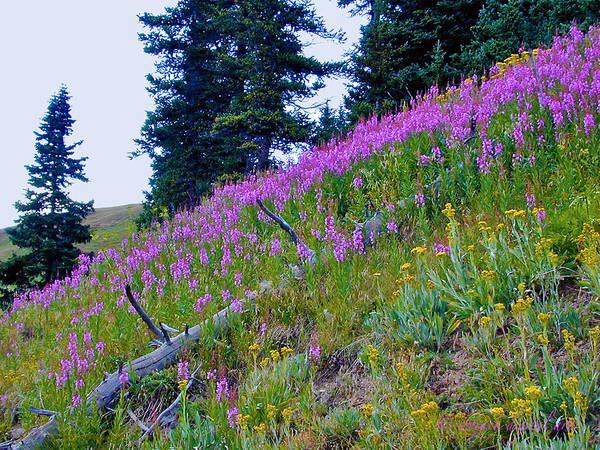 Purple Flowers Art Print featuring the photograph Mountain Flowers by Walt Jackson