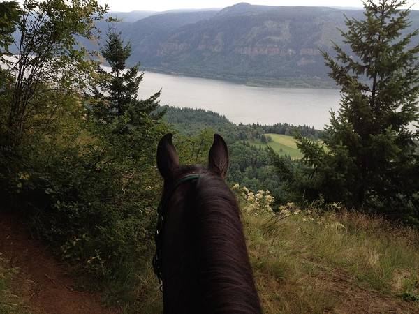 Horse Art Print featuring the photograph Mr's View by Brittany Sampson