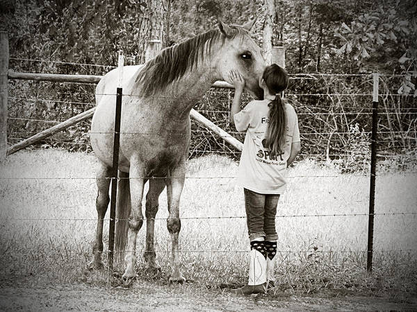 Horse Art Print featuring the photograph Mutual Admiration by Marjorie Smith