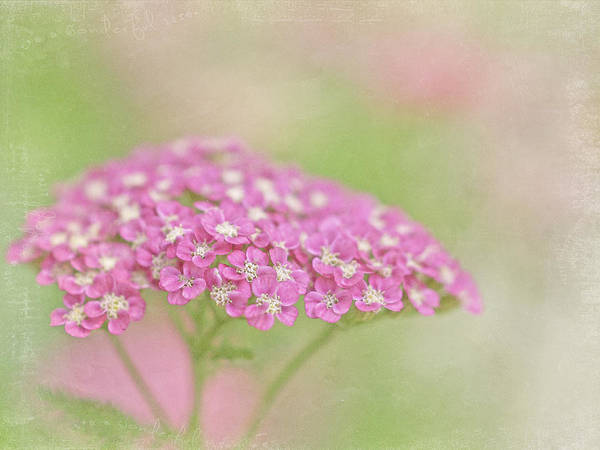 Pink Art Print featuring the photograph My Girl by Cheryl Butler