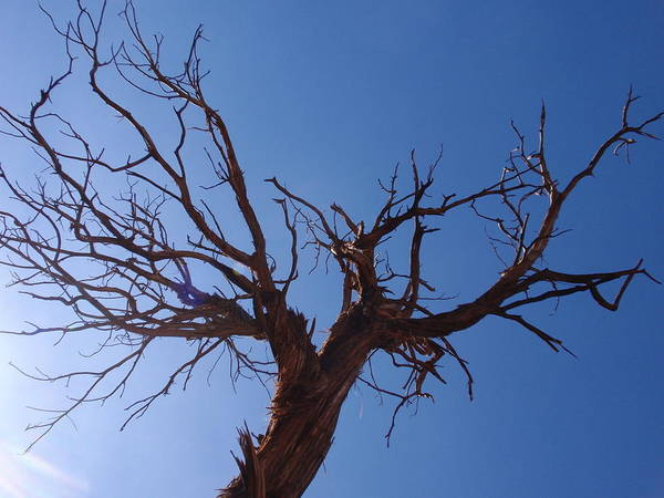 Tree Art Print featuring the photograph Naked by