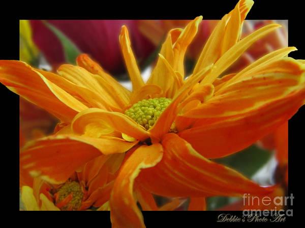 Nature Art Print featuring the photograph Orange Juice Daisy by Debbie Portwood