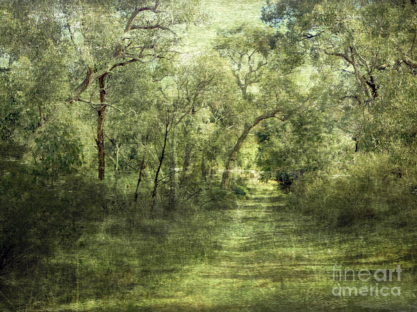 Outback Art Print featuring the photograph Outback Bush by Linde Townsend