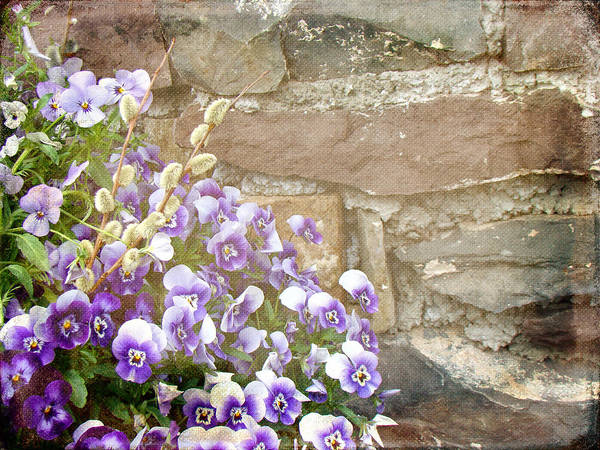 Pansies Art Print featuring the photograph Pansies And Pussywillows by Mother Nature