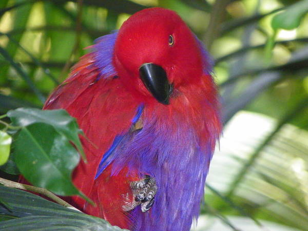 Parrot Art Print featuring the photograph Parrot Attitude by Eve Spring