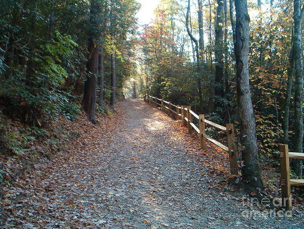 Wooded Path Art Print featuring the photograph Peaceful Path by Terry Hunt
