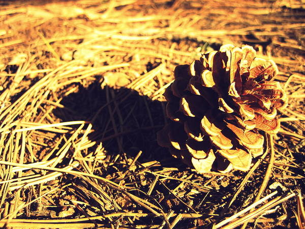 Landscape Art Print featuring the photograph Pinecone by Heather TenBrink