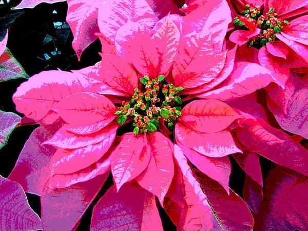 Pink Art Print featuring the digital art Pink Holiday Poinsettias by Eva Kaufman