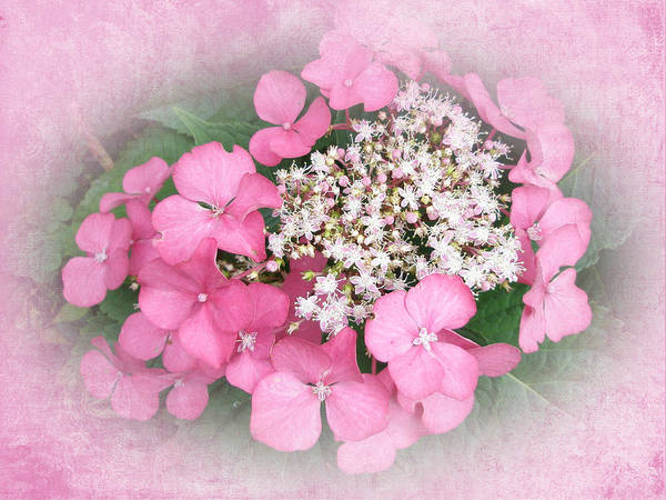 Hydrangea Art Print featuring the photograph Pink Lace Cap Hydrangea Flowers by Mother Nature