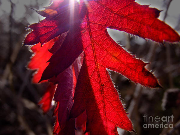 Nature Art Print featuring the photograph Red And Shadows by Blair Chaney